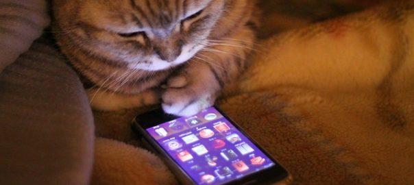 cat_iphone